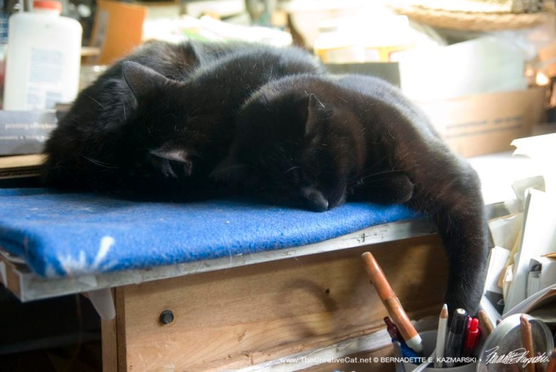 Sleepy studio cats, Sunshine and Bella.
