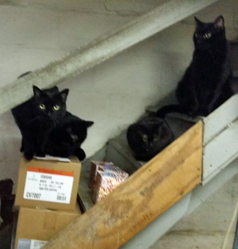 five black cats on steps