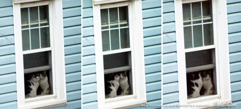 My neighbor cats in their window.