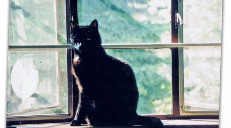 Kublai on my studio windowsill.