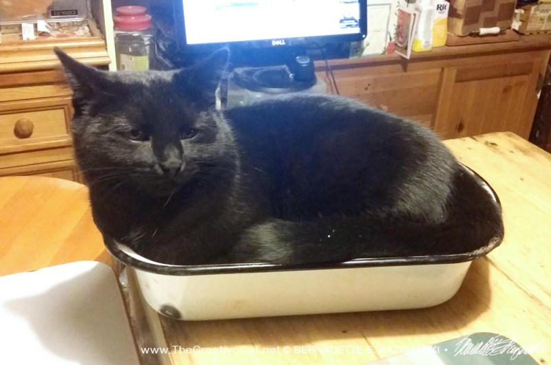 Bella finds the pan to be just her size.