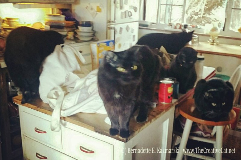 Six cats inspecting my groceries.