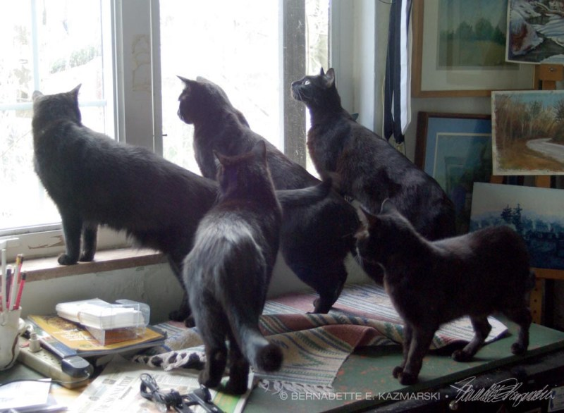 five black cats at window