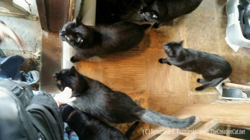 031516-Deana-Anthony-kitties2