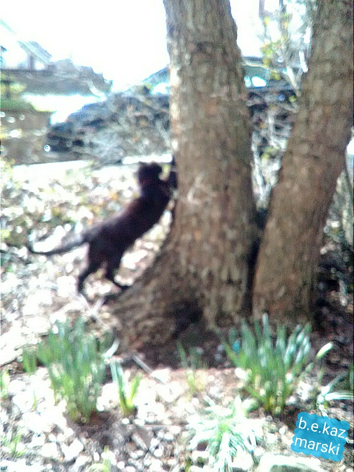 black cat scratching tree