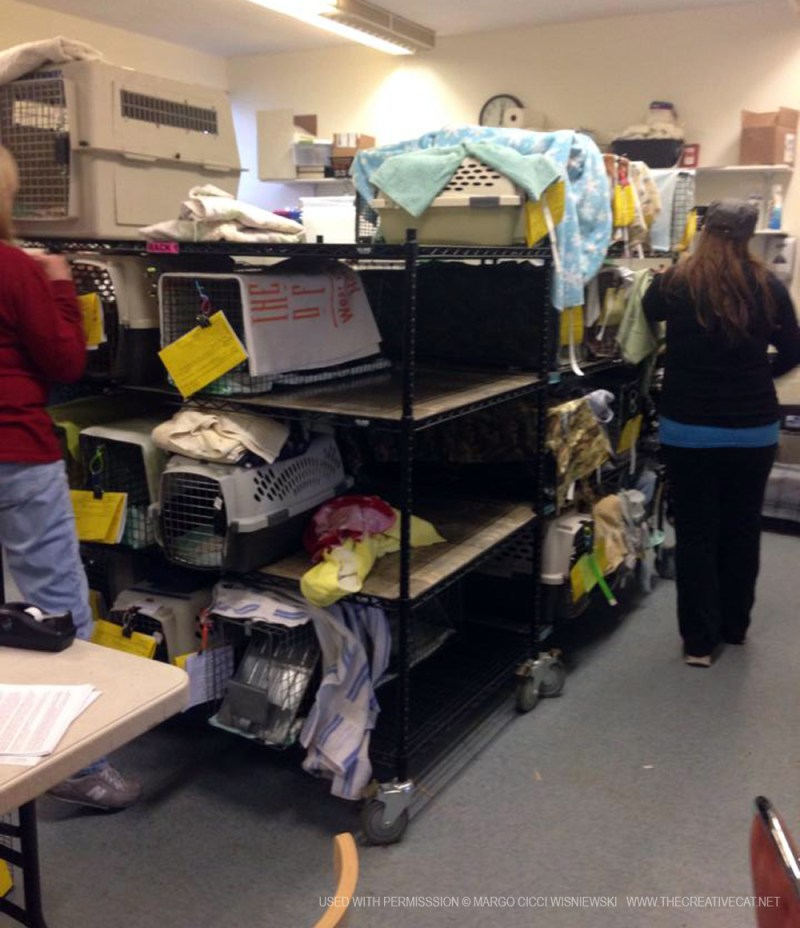 The clinic shelves fill up as cats wait in line for surgery or to go home.
