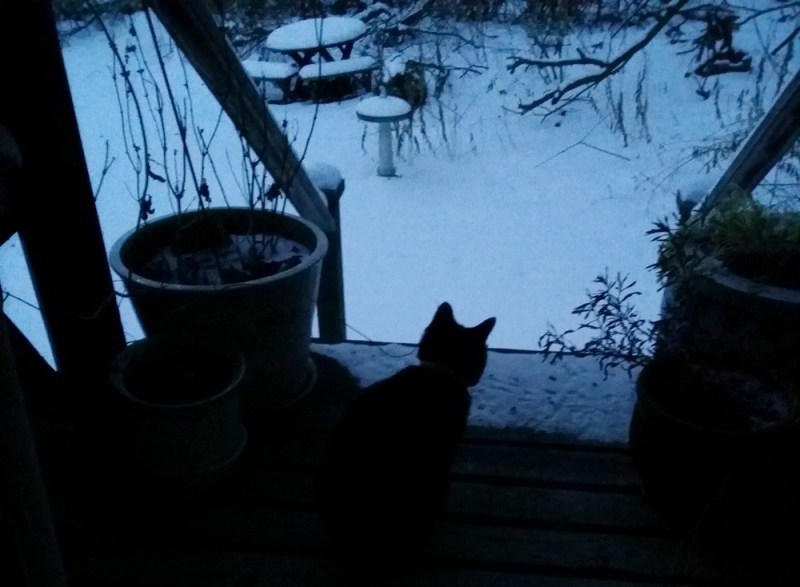 black cat on deck in snow dusk