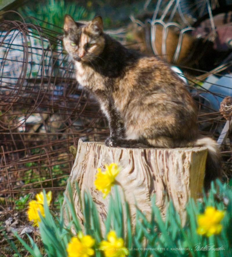 Cookie supervises my spring yardwork.