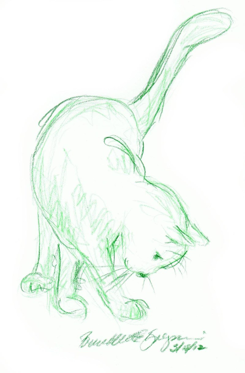 colored pencil sketch of cat