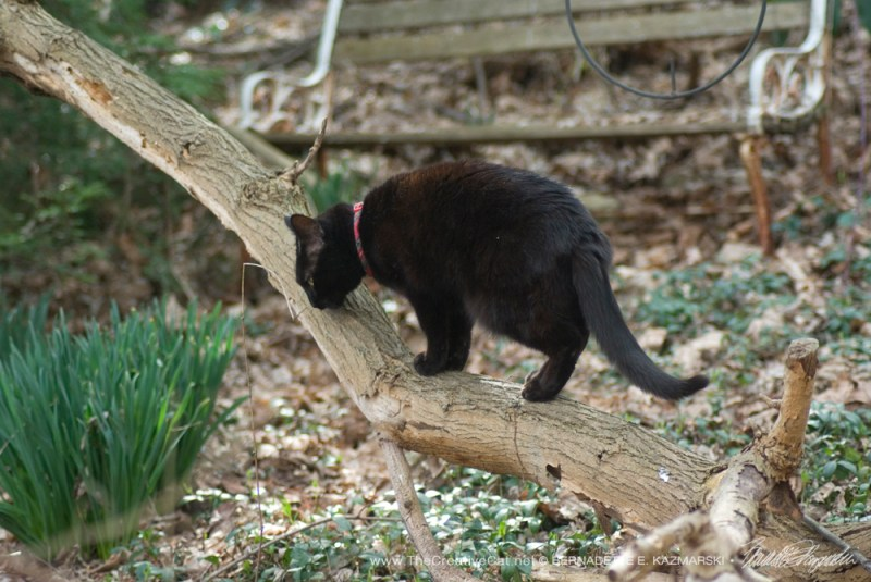 Mimi on her branch.