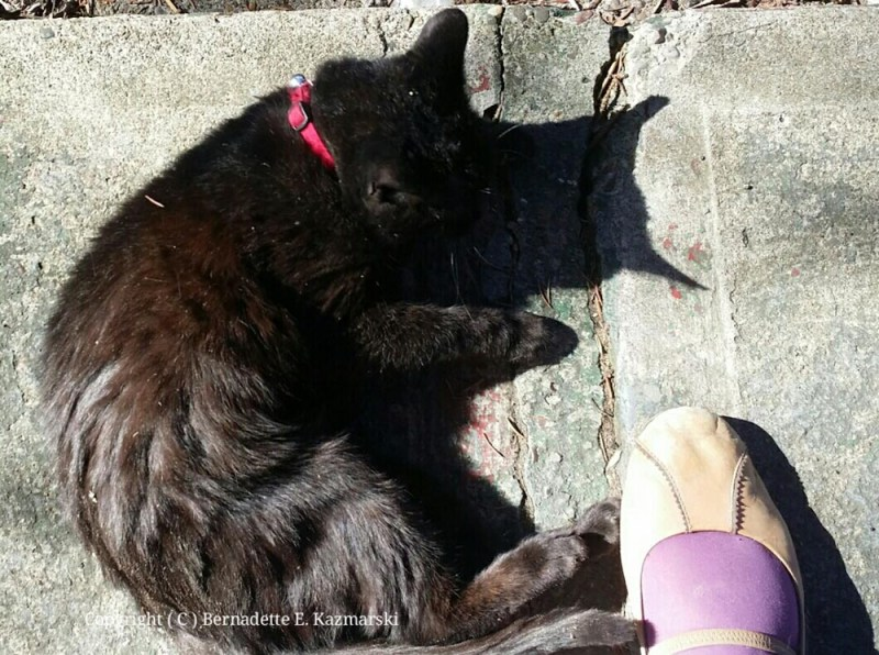 Mimi has a good roll on the porch and on my feet.
