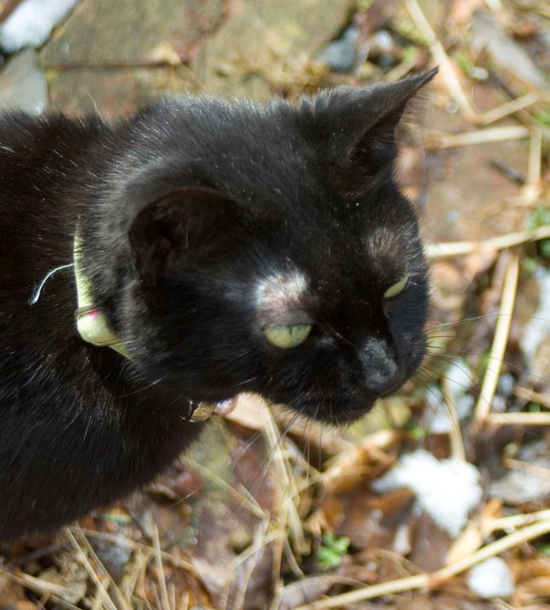 black cat talking