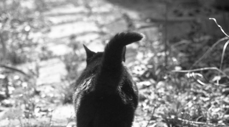Mimi walks down the garden path.