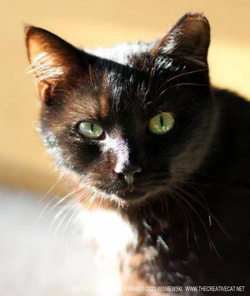Beautiful Black Pearl