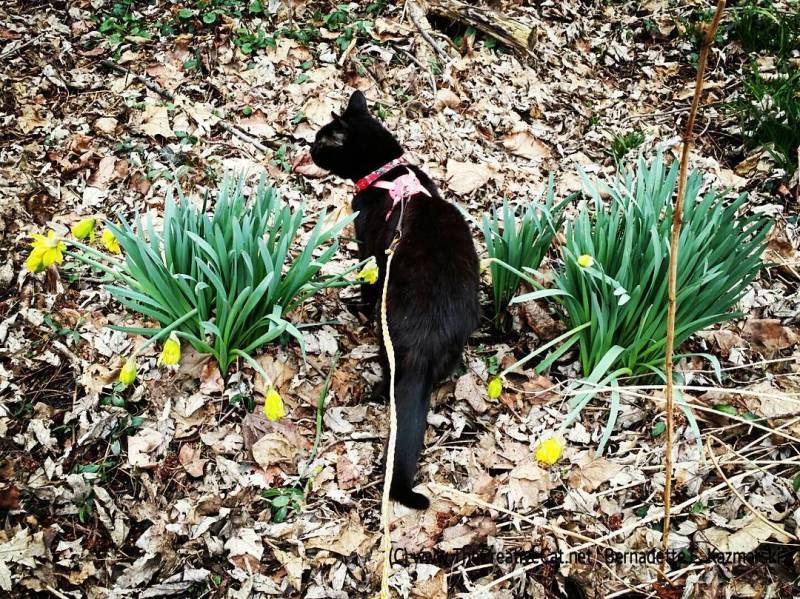 Daffodil Report