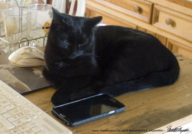 black cat with smartphone