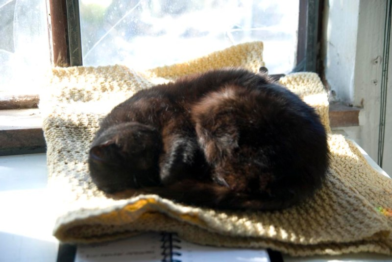 Mimi's sunny nap was a little chilly on the marble windowsill, but the blanket made it better.