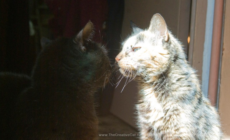 """""""What's that, sister?"""" Cookie asks Mimi. It was no problem."""