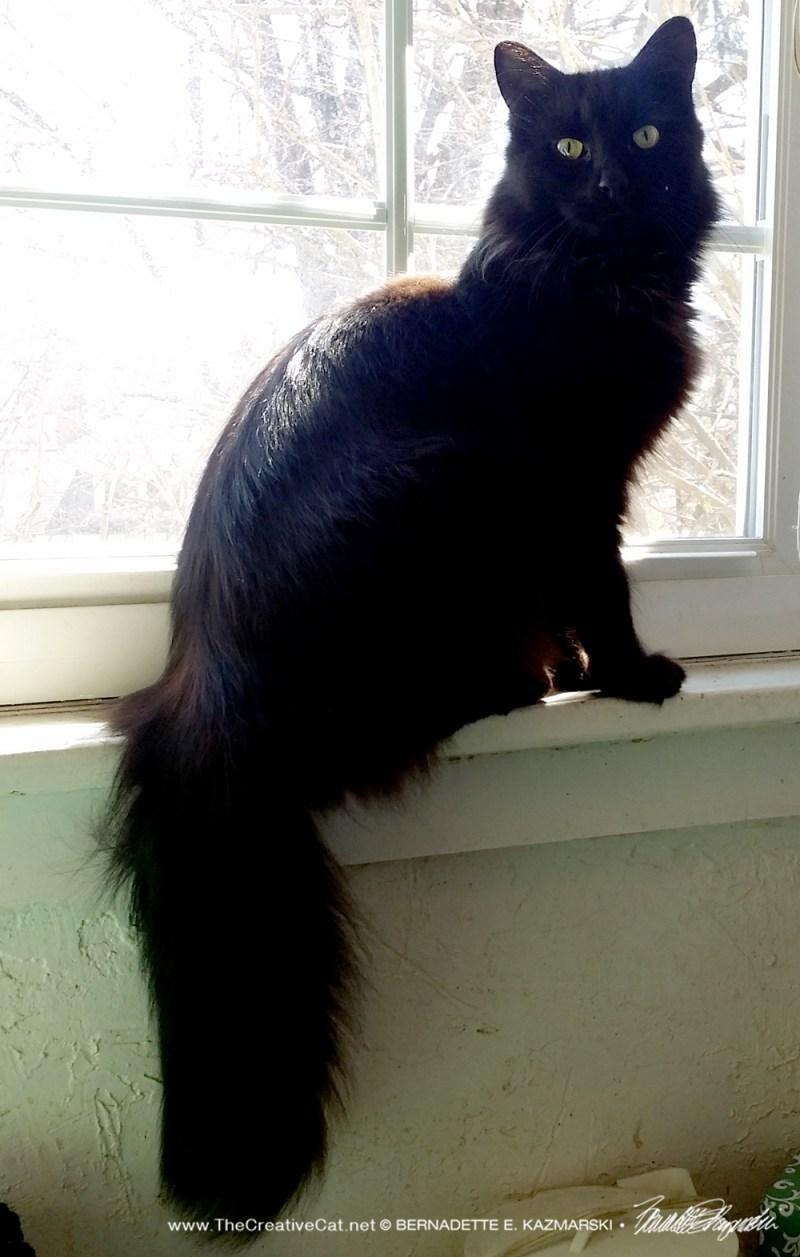 Hamlet enjoys a sunbath on the bathroom windowsill.