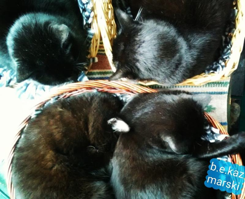 four cats in baskets
