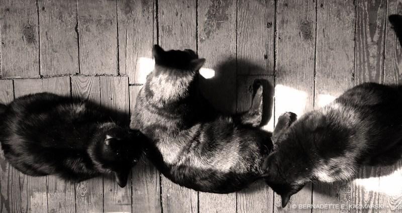 three black cats on wooden floor