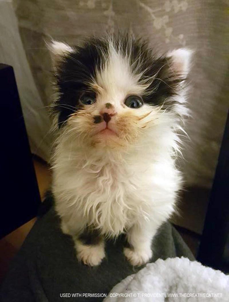 Tarra's kitten.
