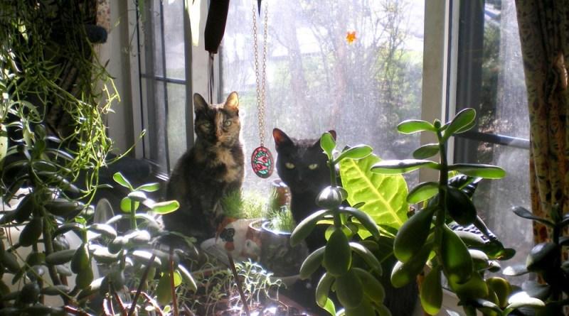 tortoiseshell cat and black cat