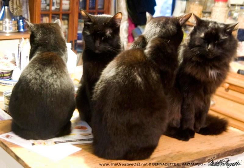 Feline Meditation Class