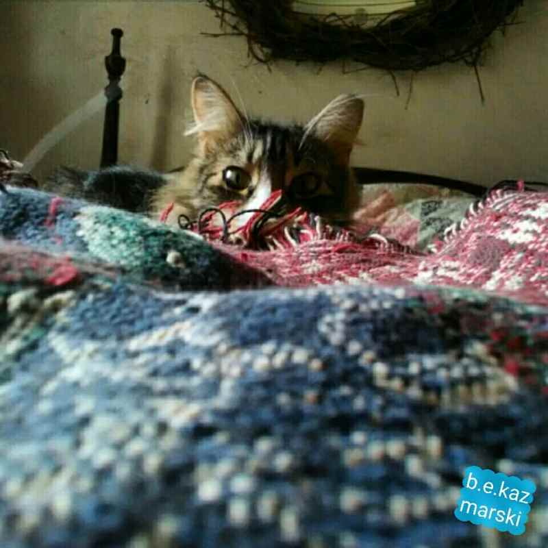 cat peeking over blanket