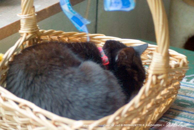 Mimi tries out Bella's basket for a nap.