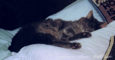 gray cat on bed