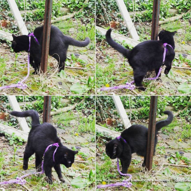 Mewsette's poledance routine.