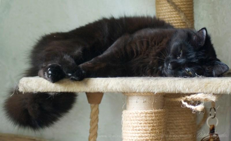 Sleepy Smokie!