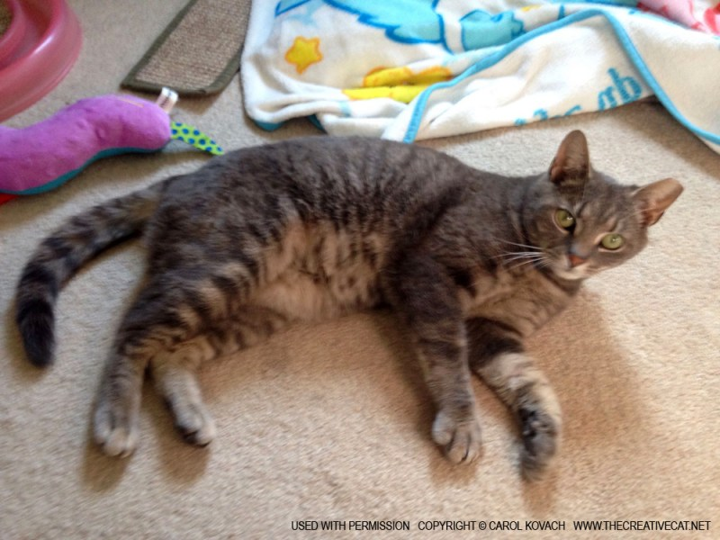 Whisper is relaxed and purring, and loves his toys.