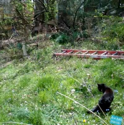 black cat in yard