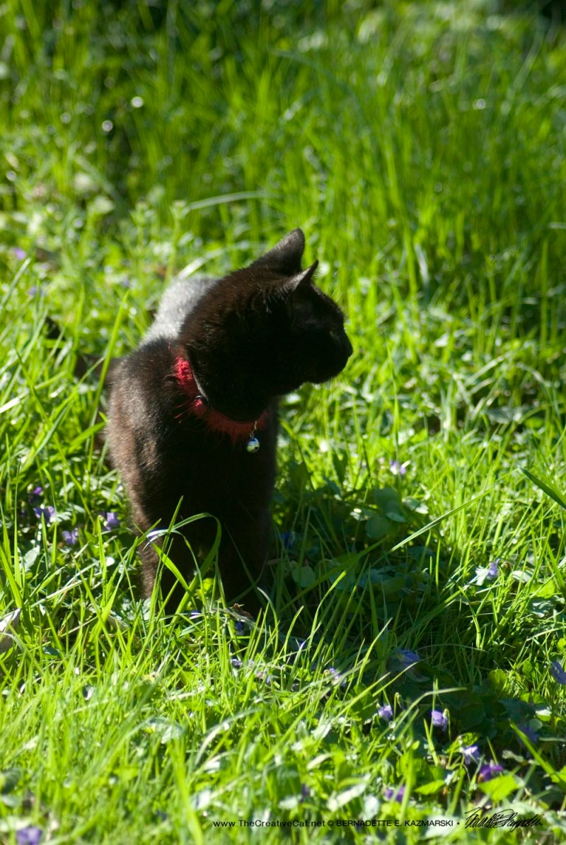 Mimi looks lovely in the grass.