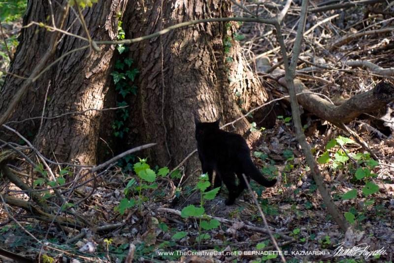 Mimi sniffs the maple tree.