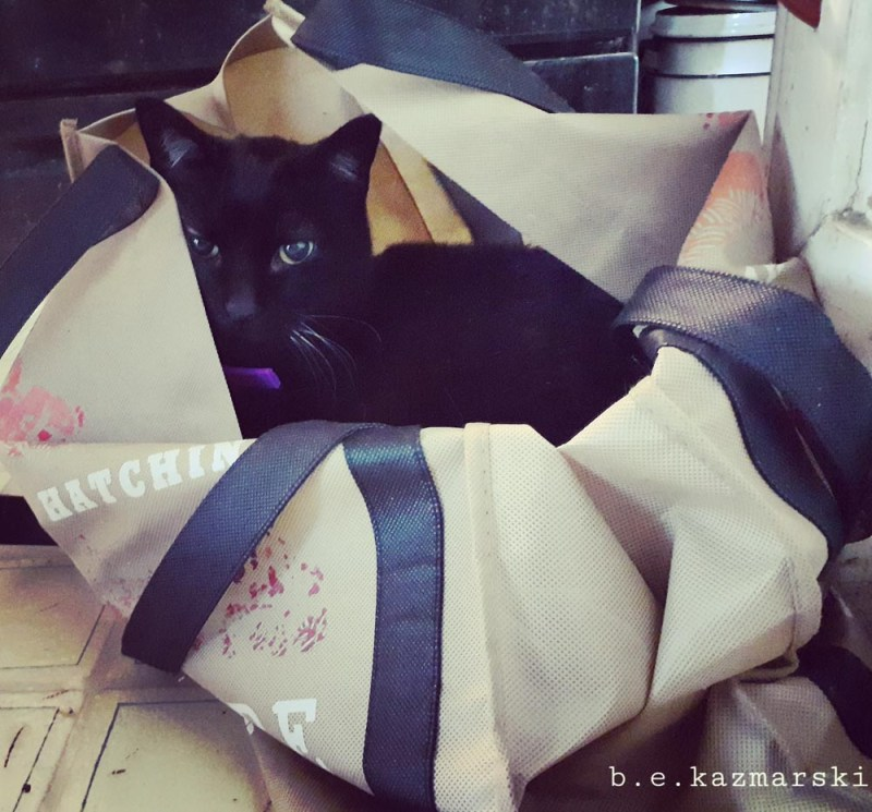 black cat in shopping bag