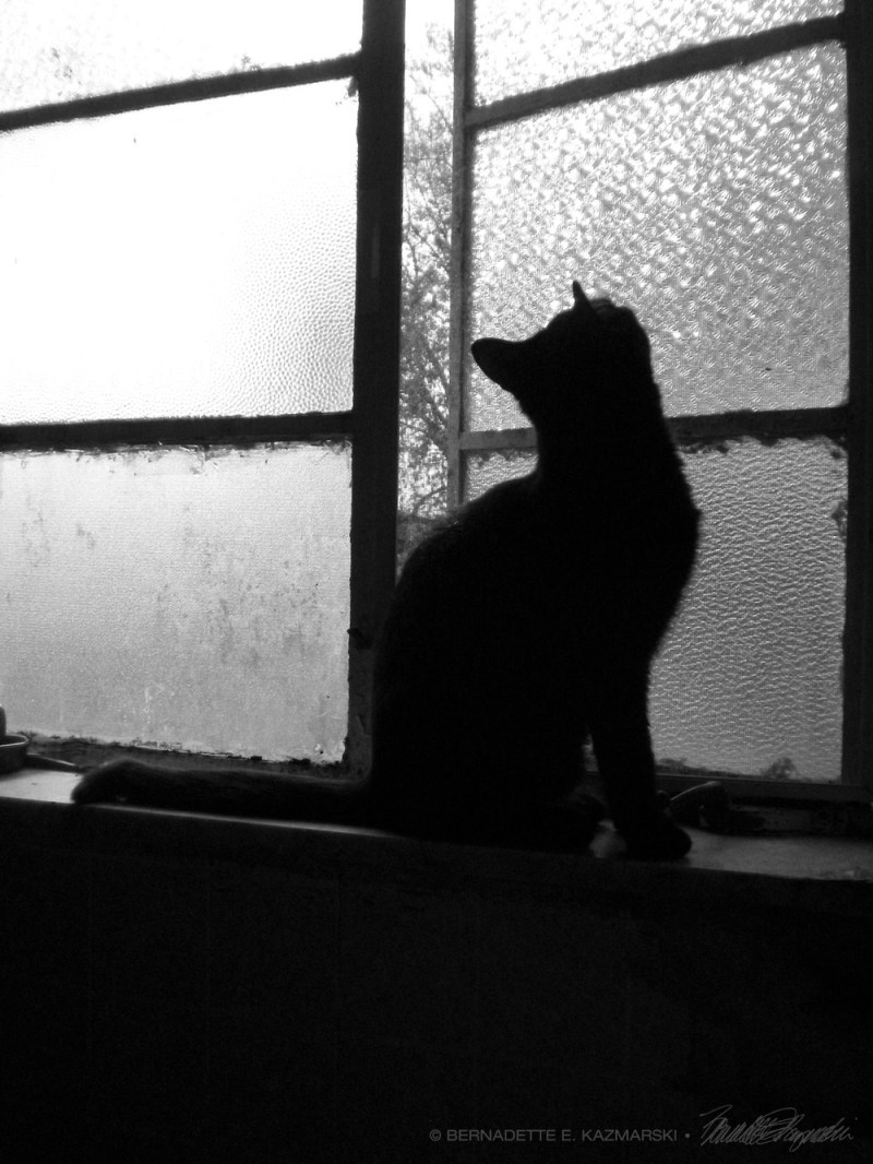 black cat silhouette on windowsill