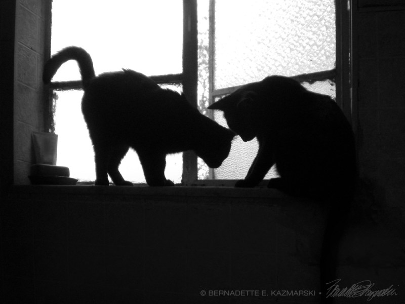 two black cat silhouettes on windowsill