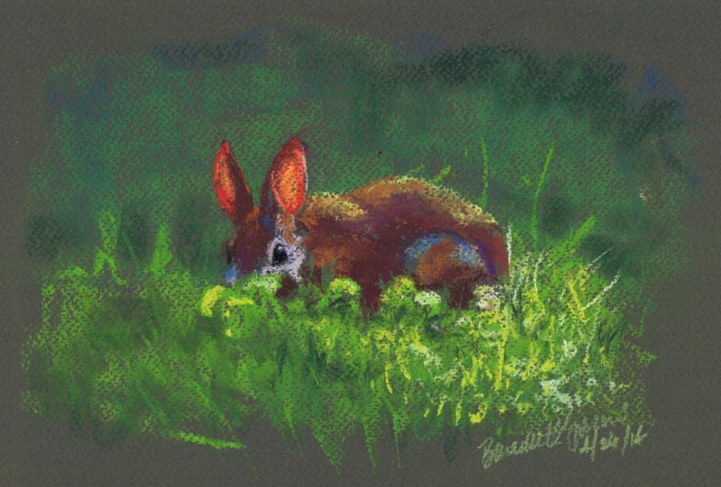 pastel sketch of rabbit in yard.