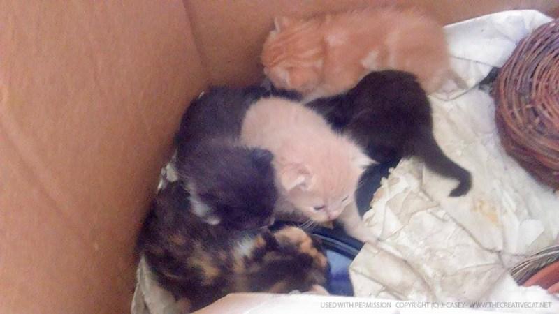 Charm's kittens.