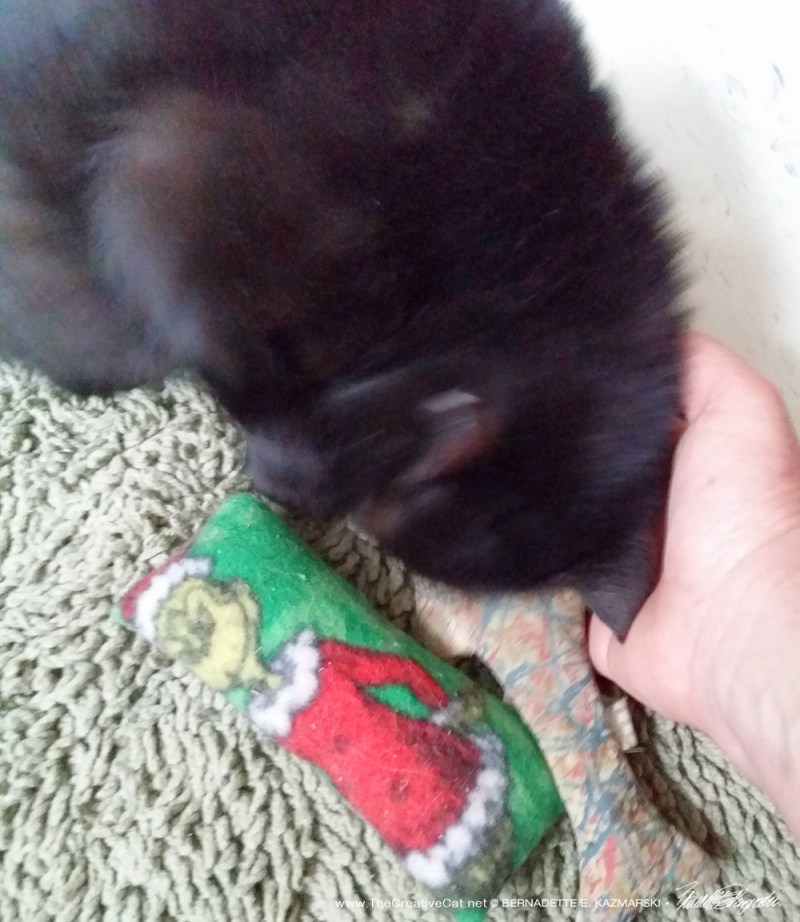 Scarlett really enjoyed her catnip toys!