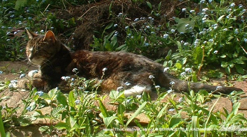 """My old man"", Stanley, dozing in my garden while I work."