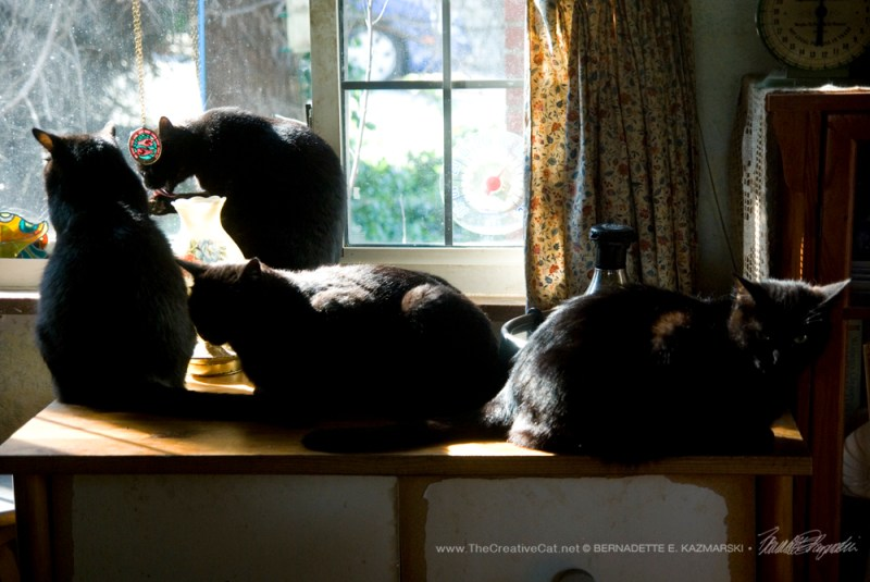Four very happy housepanthers.