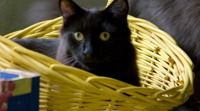 Hamlet is in the basket!
