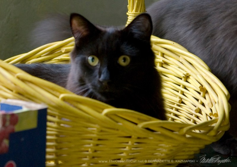 Hamlet is in the basket!