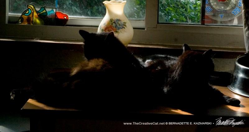 Bella and Basil, dozing.