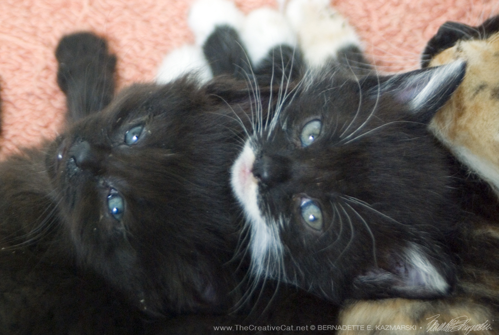 Little blue eyes.