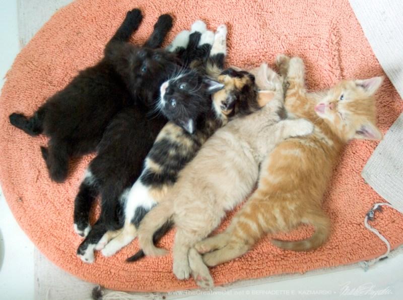 Five beautiful kittens!